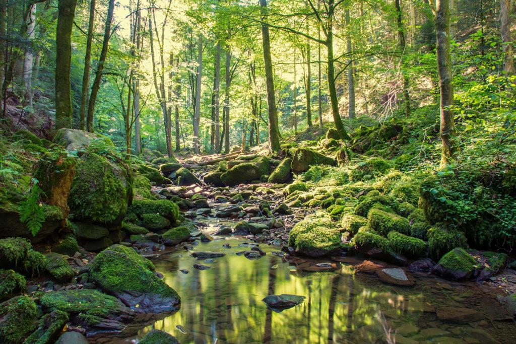 Schmeck den Schwarzwald